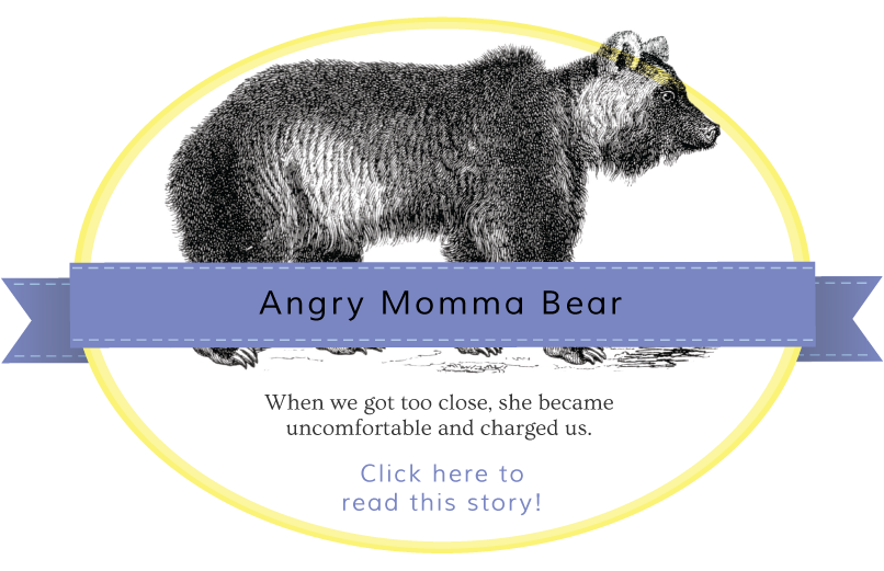 Angry Momma Bear Gentle Nudges story banner