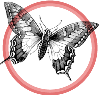 butterfly-badge