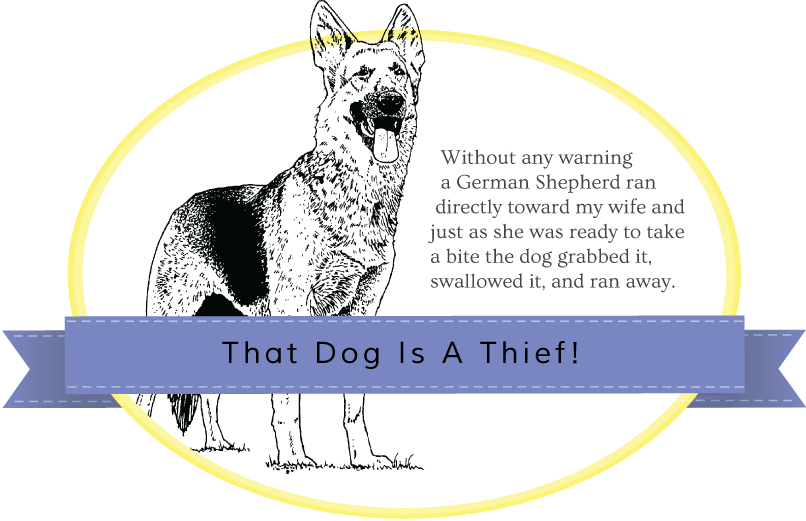 german shepard, That Dog Is A Thief story banner