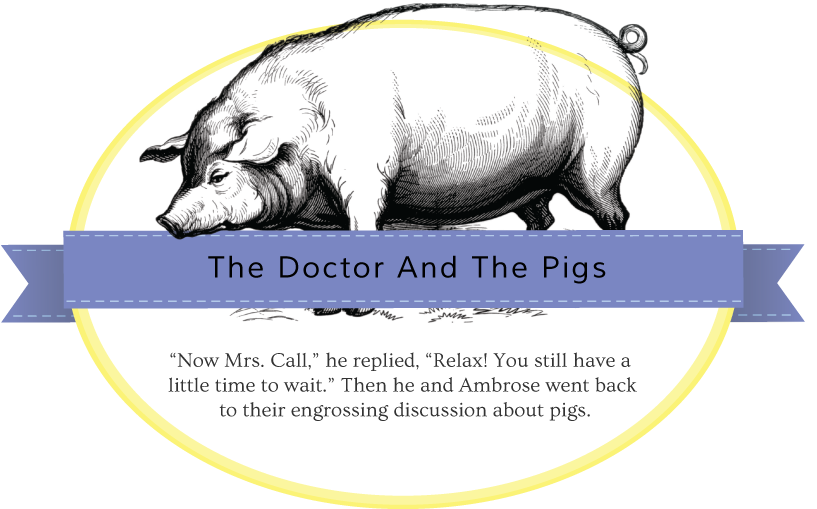 doctor-and-pigs