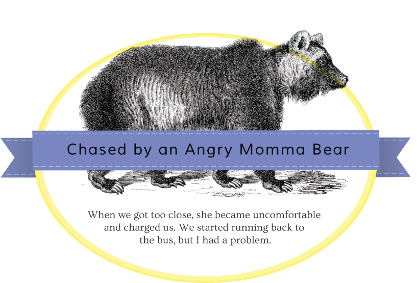 momma-bear-badge