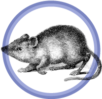 mouse badge